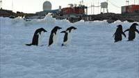 真夏の慶祥に「南極教室」がやってくる!!